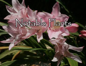 Notable Plants