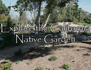 Explore the California Native Garden