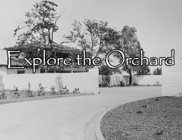 Explore the Orchard