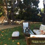 Picnic Setup Under the Tree