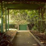 Wisteria Walkway